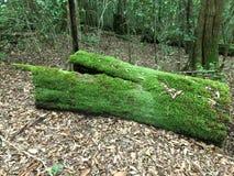 Rondin moussu de Forrest de montagne Photo libre de droits