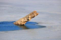 Rondin ou personne en possession d'un billet de faveur dans l'eau glaciale photographie stock