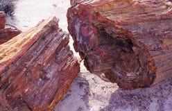 Rondin pétrifié d'arbre divisé en tronçons comme si découpé par la tronçonneuse Images stock