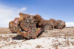 Rondin pétrifié se reposant sur le sable pâle à la partie du sud Petrified Forest National Park photo stock