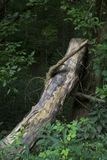 Rondin se penchant contre l'arbre Photographie stock