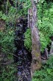 Rondin tombé, Eagle Creek, gorge de Colombie, Orégon Images stock
