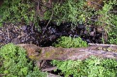 Rondin tombé, Eagle Creek, gorge de Colombie, Orégon Photos stock