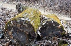 Rondins abandonnés image libre de droits