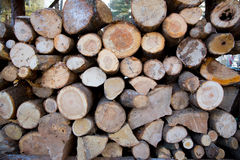 Rondins coupés au bois de chauffage en quelques saisons d'hiver Photographie stock libre de droits