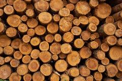 Rondins coupés secs d'arbre empilés sur l'un l'autre photo stock