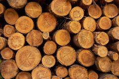 Rondins coupés secs d'arbre empilés sur l'un l'autre images stock