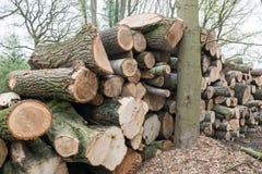 Rondins d'arbre empilés dans une forêt Image stock