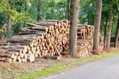 Rondins d'arbre empilés près d'un chemin forestier Photos libres de droits