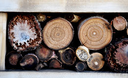 Rondins de bois coupé Photo stock
