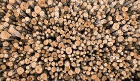 Rondins de bois de chauffage Photos stock