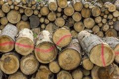 Rondins de bois empilés dans une scierie Photographie stock libre de droits