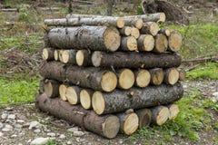 Rondins de bois empilés dans une scierie Photographie stock