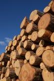 Rondins de séchage en bois de pin Photos libres de droits
