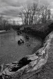 Rondins de Shoreline photographie stock libre de droits