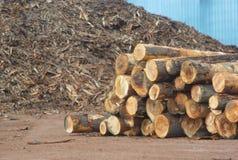 Rondins de yard de scierie avec des déchets de bois à l'arrière-plan photo stock