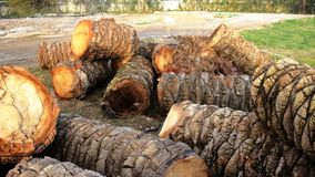 Rondins des palmiers dans le premier plan Images libres de droits