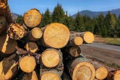 Rondins du bois moissonné, anneaux annuels évidents, photographié après photographie stock libre de droits