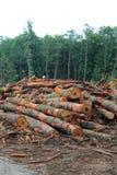 Rondins empilés dans une opération de notation du nord-ouest Pacifique de forêt Photographie stock libre de droits