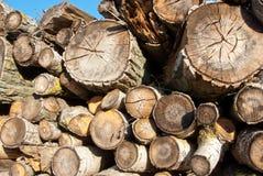 Rondins en bois Photographie stock libre de droits