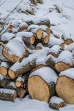 Rondins en bois couverts dans la neige Image libre de droits