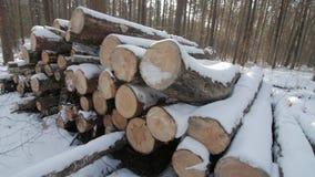 Rondins en bois couverts de neige au sol dans la forêt banque de vidéos