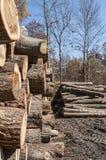 Rondins en bois empilés à une scierie amish photo libre de droits