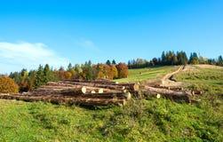 Rondins fraîchement coupés d'arbre Photos libres de droits
