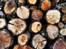 Rondins ronds d'arbre Image libre de droits