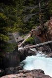 Rondins tombés à travers la crique de lac Photo stock