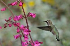 Ronflement et fleur Photos stock