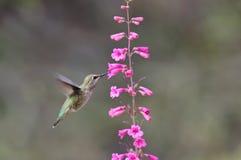 Ronflement et fleur Photo stock