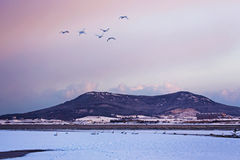 Rongcheng łabędź jezioro Obraz Royalty Free