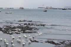 Rongcheng swan lake Stock Image