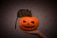 Rongeur en potiron de Halloween Photo stock