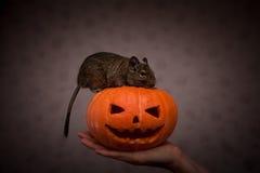 Rongeur en potiron de Halloween image stock