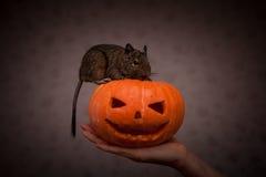Rongeur en potiron de Halloween photo libre de droits