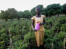 Rongo, Kenya Immagini Stock Libere da Diritti