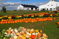 Ronks, PA: Pumpki Patch Farm Royalty Free Stock Images