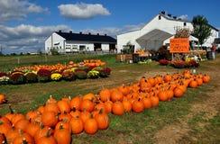 Ronks, PA: Pumpki Patch Farm Stock Photos