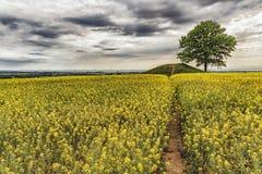 Ronneberga Backar Landscape Stock Images