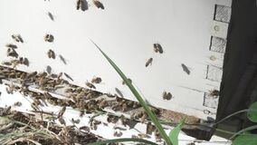Ronzio delle api intorno ad un alveare stock footage