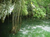 roo riviera quintana maya джунглей cenote майяское стоковая фотография