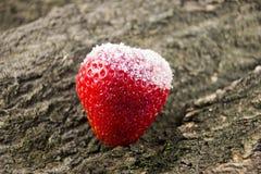 Rood aardbeifruit in suger op hout Stock Foto's