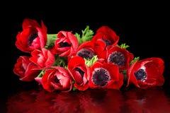 Rood anemoonboeket Royalty-vrije Stock Foto