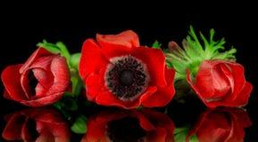 Rood anemoonboeket Royalty-vrije Stock Fotografie