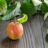 Rood Apple op donkere houten achtergrond Royalty-vrije Stock Foto's