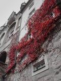 Rood Autumn Leaves op een historische voorgevel stock fotografie