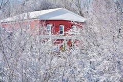 Rood baksteenhuis achter sneeuw behandelde boombovenkanten stock foto's