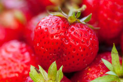 Rood Berry Of Strawberry On Background Royalty-vrije Stock Afbeelding